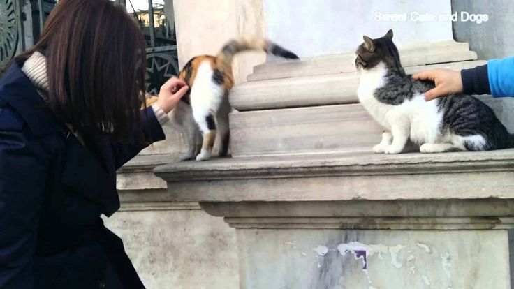 Sweet Cats in Istanbul