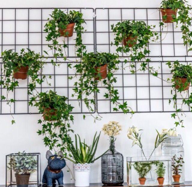 Plantjes aan muur