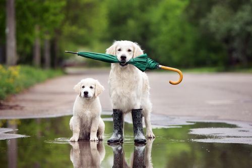 Easter weekend weather forecast http://www.cumbriacrack.com/wp-content/uploads/2017/04/dog-weather-rain.jpg Many places will see sunny spells for Easter weekend, but it will be cooler than last weekend with some showers too    http://www.cumbriacrack.com/2017/04/12/easter-weekend-weather-forecast/