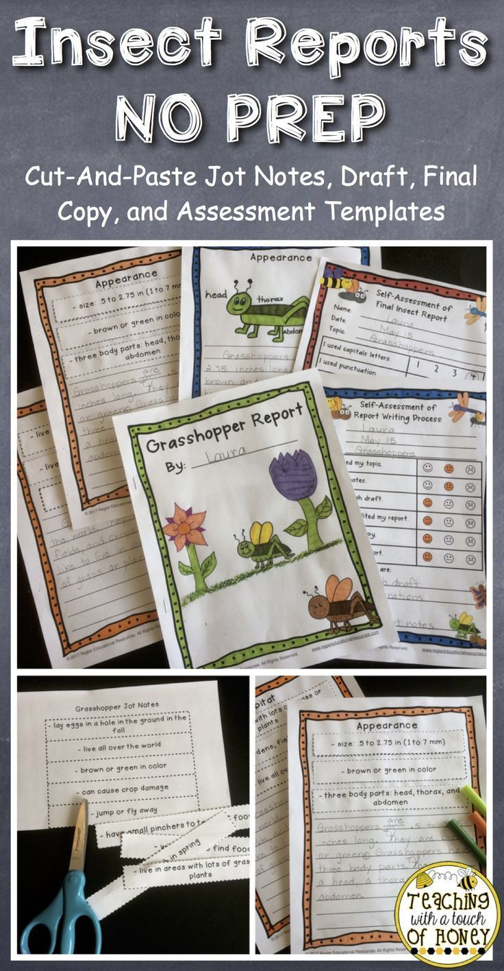 Use these insect report templates with students who are learning how to write a report. Cut-and-paste jot notes are provided so students can focus on learning the report writing process. NO PREP templates are provided for both the draft and final copies. These report writing templates are perfect for students in grade one and grade two. #reportwriting #teachingwithatouchofhoney