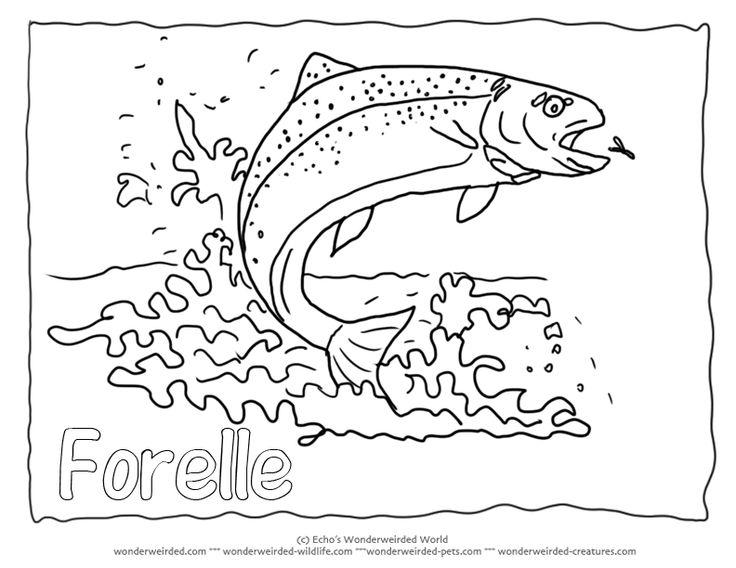 Regenbogen Forelle Malvorlage Fisch Ausmalbilder Rainbow Trout Coloring Page