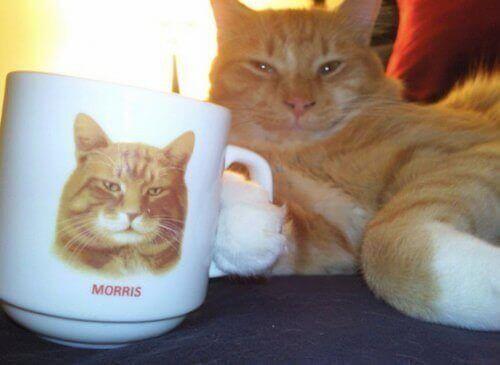 100 photos de chats rigolos : photo de chat marrant, image de chat drôle, humour chat, image drole de chat, chat comique chats images chat rigolo