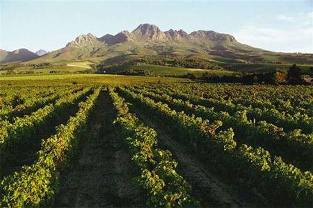 stellenbosch south africa - Google Search