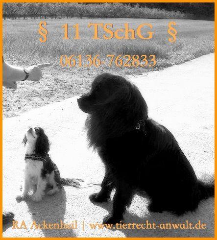 § 11 TSchG Tierschutzgesetz - Erlaubnispflicht: Sind Sie Hundetrainer, Hundepsychologe, Hundetherapeut o. arbeiten Sie mit Hunden u. suchen einen Anwalt, eine Rechtsberatung zum § 11 TSchG (Tierschutzgesetz)?Haben Sie Fragen zur Erlaubnispflicht § 11 TSchG (Tierschutzgesetz / TierSchG) , zum Antrag, der behördlichen Auflagen, zur Sachkunde, einem Berufsverbot o. den rechtlichen Möglichkeiten? wünschen Sie zum Thema § 11 TSchG eine kompetente telefonische Rechtsberatung Näheres 06136 - 76 28…