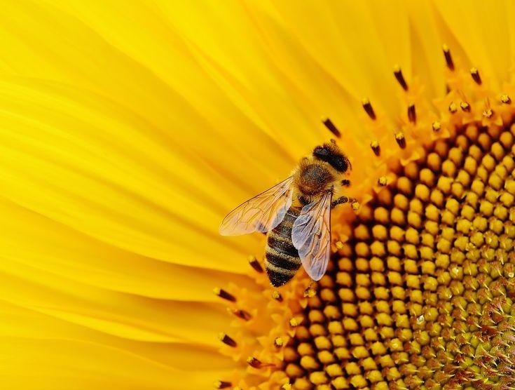 Σεμινάριο για την αντιμετώπιση των εχθρών της μέλισσας