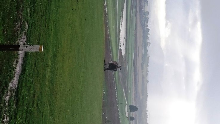 Frank the Tank guarding our @SharkGregNorman Yarra Valley course this morning #yarravalley #whyilovethisgame
