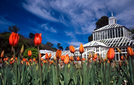 Dunedin Gardens