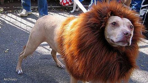 中国動物園のライオンは犬だった!鳴き声でばれる