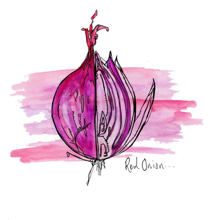 Red onion illustration