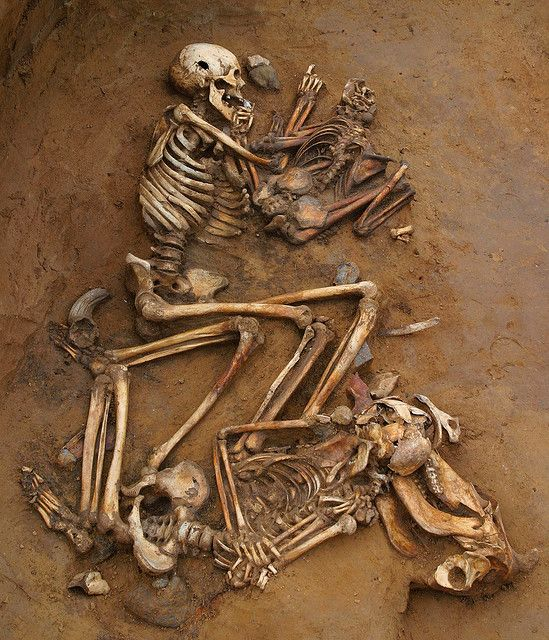 Cliffs End Farm - the pit burial    In one Late Bronze Age pit archaeologists found the skeletons of five people. The upper skeleton is an old man, with a child beside him. The lower one is a teenager with his head on the skull of a cow.