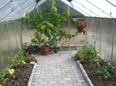 Att ha ett eget växthus där man kan odla upp egna kryddor, grönsaker och andra växter är något som många trädgårdsintresserade drömmer om. Det bästa med att ha ett växthus är att man i det kan odla…