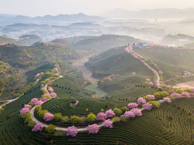 Tea plantation Fujian China. #gorgeous #friends #smiles #beautiful #friendship #fitness #virgin #active #personaltrainer #pt #gymlife #workout #football #humbled #enjoylife #dedication #blessed #wycombewanderers #modeling #crossfit #projetocapitaoamerica #ngmvaientendernada #amrapbrasil #family #lovelovelove #vscocam #topvsco #vsco #saintpetersburg #china