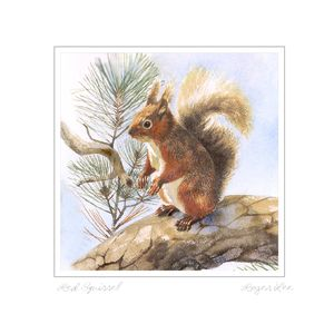 Red Squirrel greetings card by Roger Lee