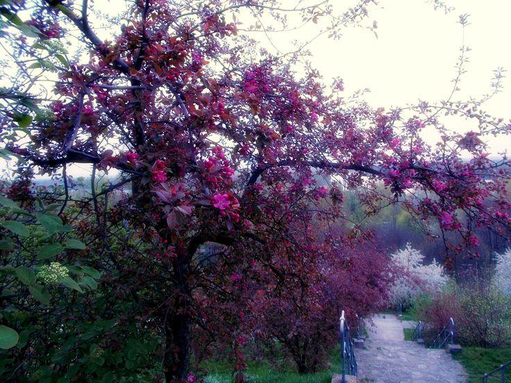 A fák költemények, amelyeket a Föld az Égnek ír. KAHLIL GIBRAN