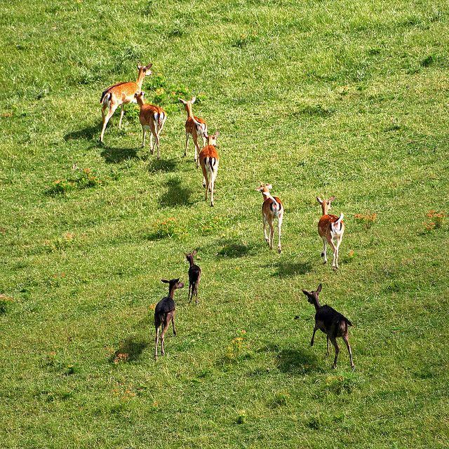 Faunal Park of Monte Amiata - photo by Roby Ferrari