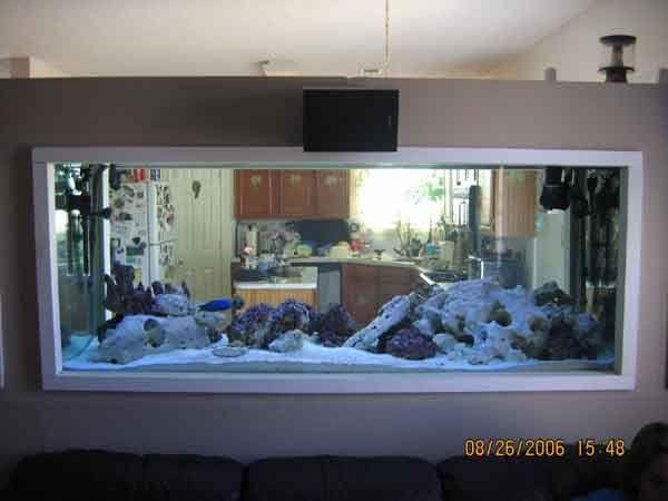 best 25+ aquarium raumteiler ideas on pinterest | aquarium
