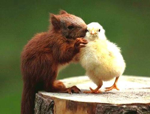 Lustige Tiere Gästebuch Bilder - 060_5.jpg - GB Pics