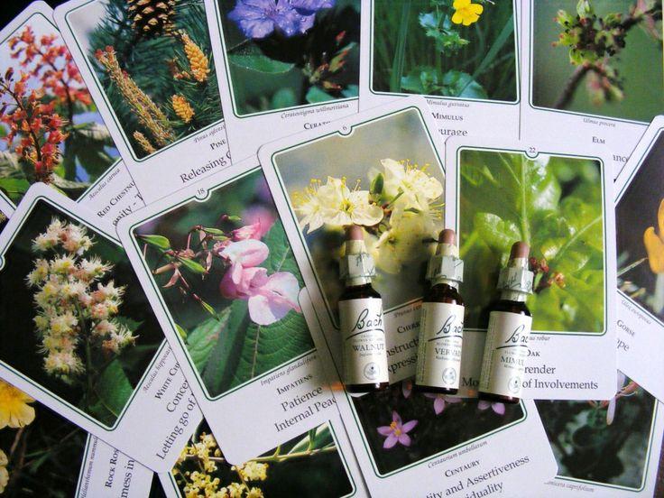 I fiori del Dr. Bach, un rimedio eccellente per ridonare armonia alle nostre emozioni