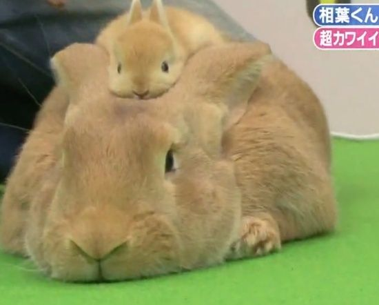Mama and baby bunny. OMG SO CUTE.