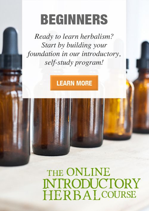 Learn herbal remedies! The Online Introductory Herbal Course, a self study program for the beginner herbalist. #learnherbs