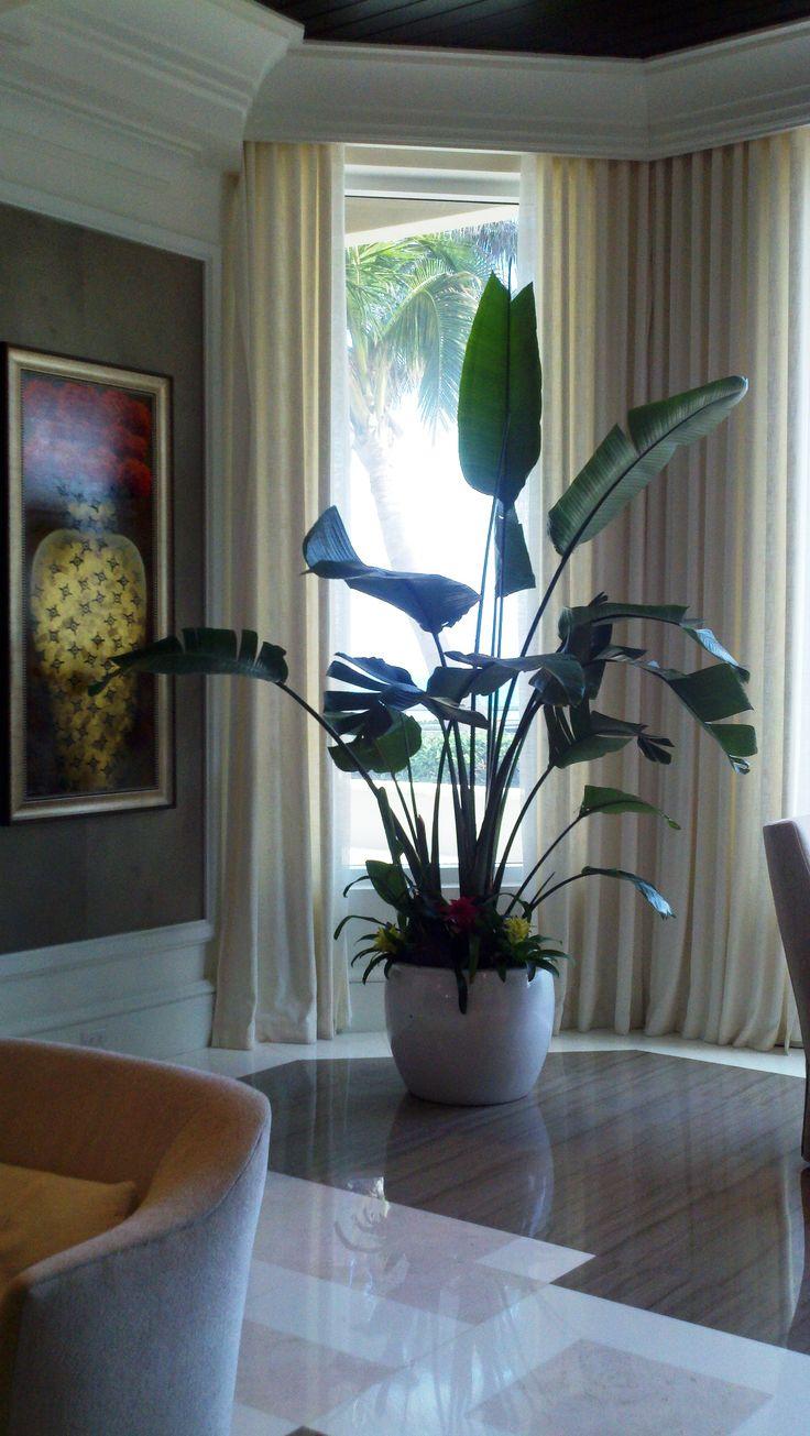 Inside Plants Indoor Gardening