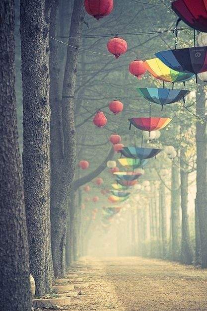rainbow beautiful umbrella nature scenery spring south korea nami ...