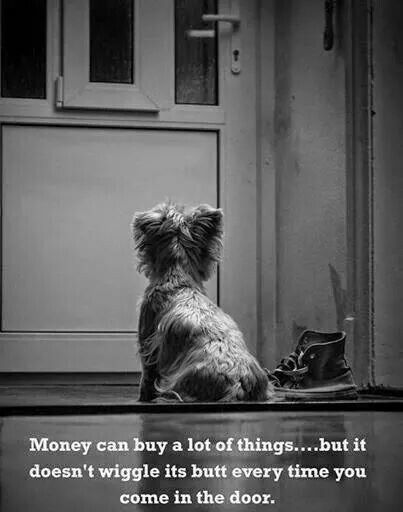 Money can buy a lot of things, but it can't buy unconditional love❤❤❤❤:
