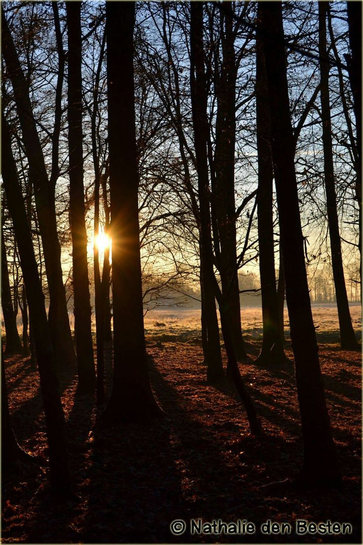 Voorsterbos Kraggenburg   amateur fotografie   winter   bos   fotografie   wandelen   natuur   ☆