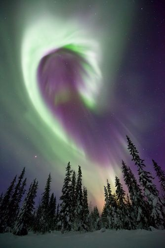 Treetop Aurora Borealis by Antony Spencer Photography - Aurora Borealis dances in the night sky over snow covered trees in Arctic Sweden.