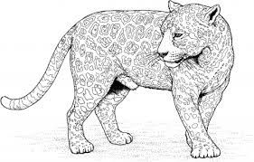 Jaguar 12 Coloring Page From Jaguars Category Select 28148 Printable Crafts Of Cartoons Nature Animals Bible And Many More