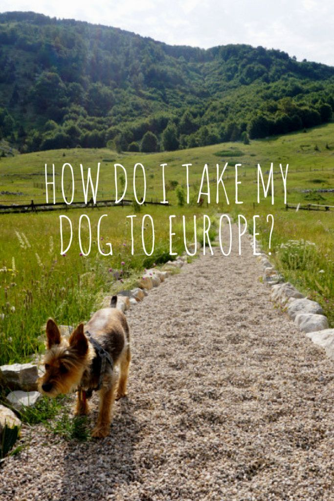 How To Travel To Europe With Your Dog The Ramble Dog Vacations Dog Friendly Vacation Pet Travel