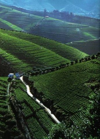 The best place on earth for Port, Douro, Portugal