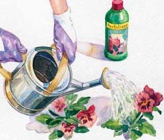 Types of Organic Vegetable – Garden Fertilizer | best garden fertilizer