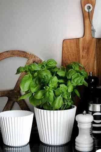 1000 ideen zu blumentopf gro auf pinterest gro e blument pfe pflanzt pfe gro und gro e. Black Bedroom Furniture Sets. Home Design Ideas