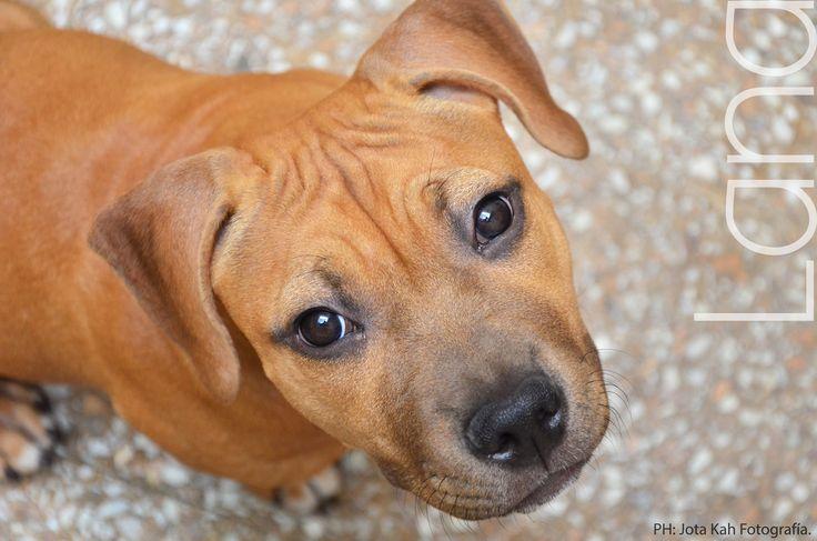 dog dog  > love love