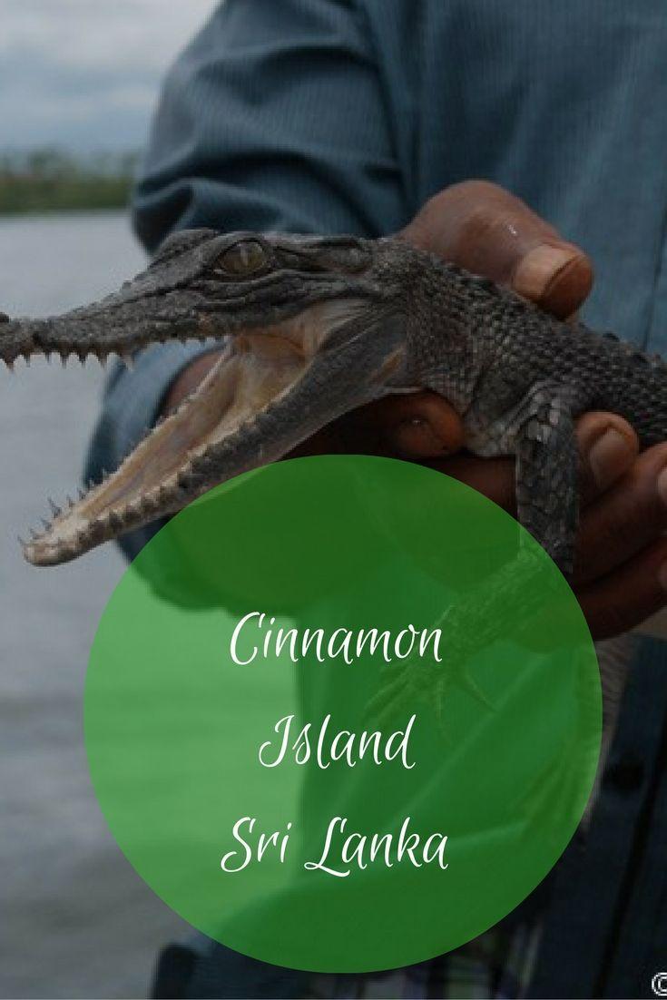 Cinnamon Island Sri Lanka | Cinnamon Sri Lanka | Sri Lanka Galle Cinnamon Island | Mangrove Swamps Sri Lanka