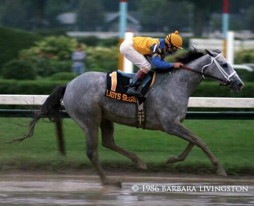 Lady's Secret (1982-2003). 1986 Horse of the Year