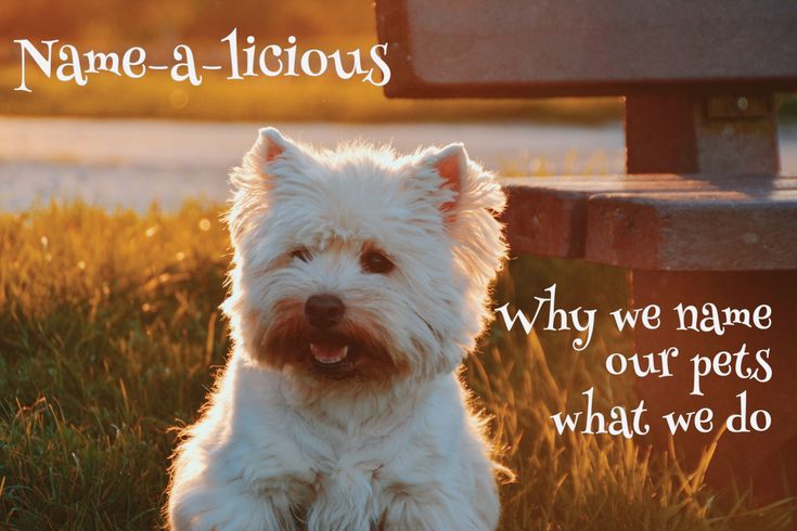 Name-a-licious! Why we name our pets what we do. #pets #names #cute https://petztrax.wordpress.com/2015/07/14/name-a-licious/