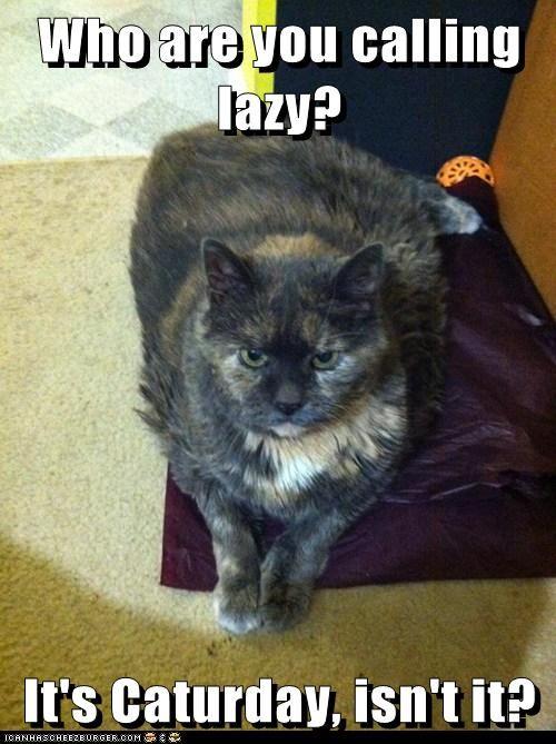 Crazy Cat Lady Internet Hookup Video Funny