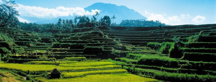 Bali Resort Ubud | Accommodation Ubud | Four Seasons Resort Bali at Sayan