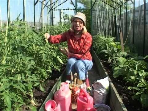 Уход за крупноплодными томатами: Подкормка и полив - YouTube. 177 видео - ОКТЯБРИНА ГАНИЧКИНА | САД И ОГОРОД | Постила