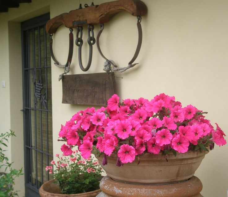 Pink flowers in front of the Reception of Fattoria di Poggiopiano