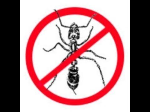 За 2 минуты вы узнаете как легко избавиться от муравьёв. ВНИМАНИЕ! Мои мураши ушли, вы со своими поэкспериментируйте тоже, надеюсь, что поможет и вам! Подпис...