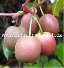 Kiwi Kens red samice