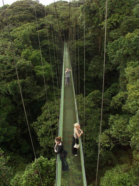 Canopy walkway above Monteverde rainforest, Costa Rica.