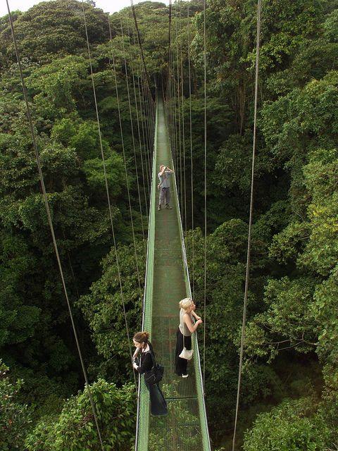 Canopy walkway above Monteverde rainforest, Costa Rica.