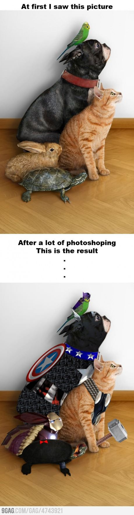 best animals that make you wonder images on pinterest