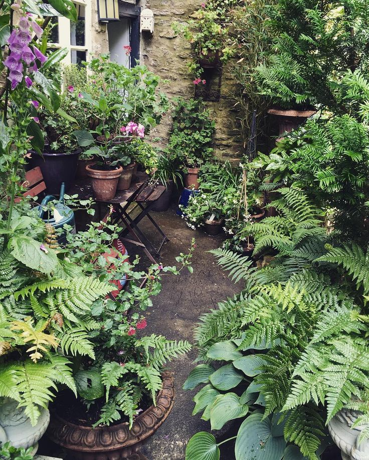 Wet days and sunny afternoon/evening seem to be the theme of summer so far.. #gardens #wet #sunny #summer #green #ferns #lush #gardening #gaygarden #towngarden #courtyard #frome #town #georgian #yard #lush #pelargonium #hosta #Somerset #tradchap...this is England??!! looks like the French Quarter, N. O.