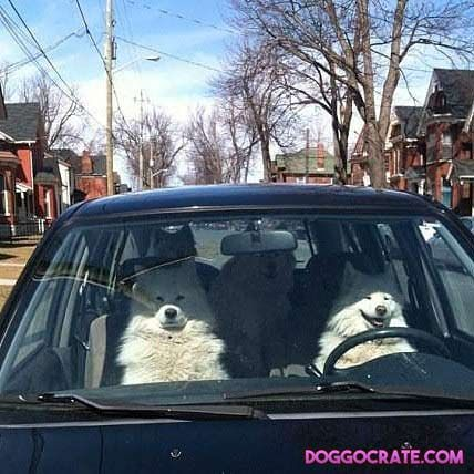 When your wife drives the car... #dogs #cute #aww #puppies #doglovers #puppy #dog