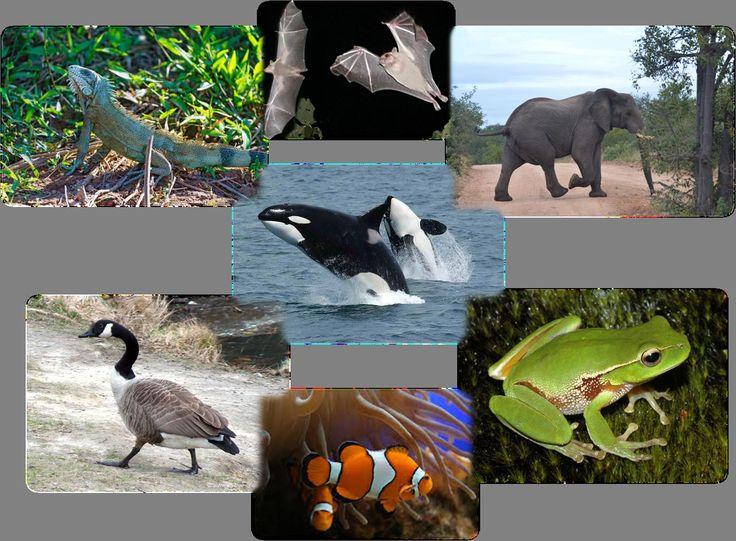 REA creado por Francisca García como trabajo final del curso.  En este REA se describe a los animales vertebrados , su clasificación y las características principales de los cinco grandes grupos de animales vertebrados. 2º de primaria